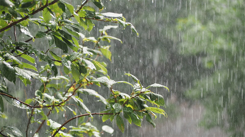 Why is Rain Water Harvesting Important?